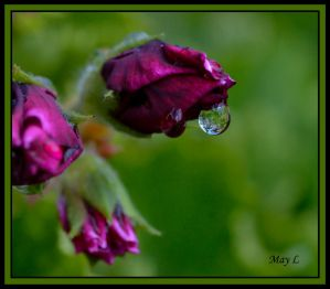 Leaves in the Droplet by =MayEbony