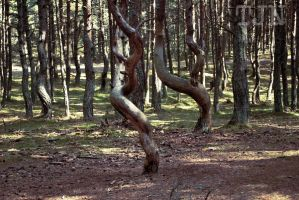 Dancing Forest by nspnott