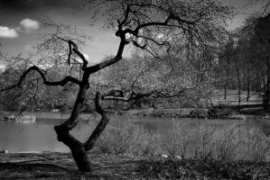 Lonely tree in Central Park by photofenia