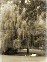 You + Me Under the Willow Tree by Ciro1984