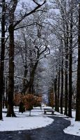 Snowy Symmetry by mark-flammable