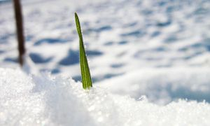 Grass Looking Out of Snow by Lufty09