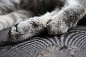 Soft Paws by Rala1996