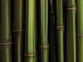 Bamboo by Imagitone