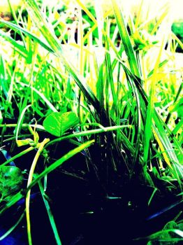 Who Says All Grass is Green? by hippysmrf8