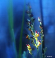 Tiny Colorful Grasses by Manwathiell