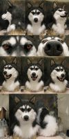 HUSKYYYYY by Crystumes