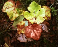 Autumn Leaves by janemk