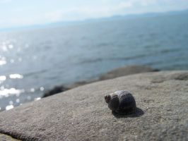 little shell by Lamamilie