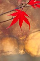 Autumn leaves 16 by TheEtherealSoul