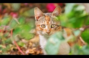 Hide and Seek by silvioi