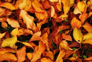 Autumn Leaves 1 by jerryfrencho