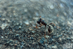 Ant by Peanut-Olive