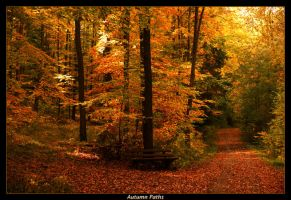 Autumn Paths by JoInnovate