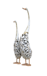 Swans PNG by FrankAndCarySTOCK