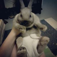 Bunny in a Diaper by Champineography