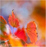 Autumn Fires by CecilyAndreuArtwork