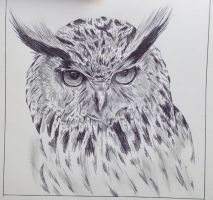 Hibou by camilleroc