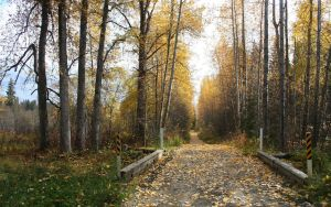 Beautiful Autumn by grant-erb