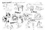Zoo Sketches by FernandaFrick