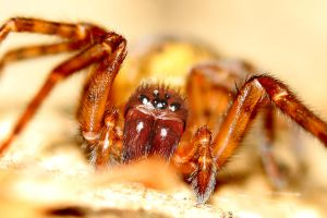 Little Spider by s-kmp