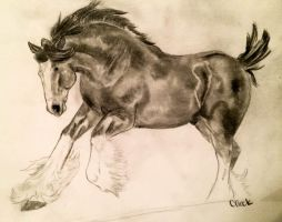 Clydesdale by BamaBelle2012