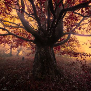-Archaic blending of the souls- by Janek-Sedlar