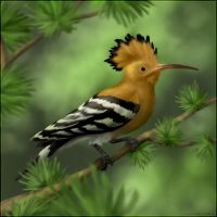 Hoopoe by jrtracey