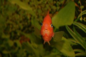 Day 252: Happy Fish by coolwanglu
