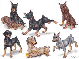 Dobermans by Bafa