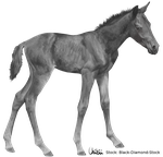 Foal Greyscale - FREE TO USE by BH-Stables