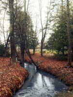 Meandering Stream by screenname911
