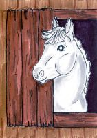 White Horse Head ATC by calzephyr