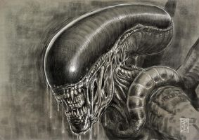 Xenomorph by LyntonLevengood