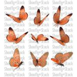Butterfly Stock 6 by Shoofly-Stock
