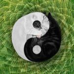 Ying and Yang by TommyTejeda