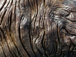 Driftwood 2 -- Sept 2009 by pricecw-stock