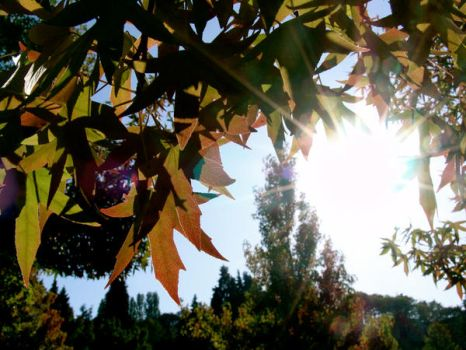 when fall was flung upon us. by hikait