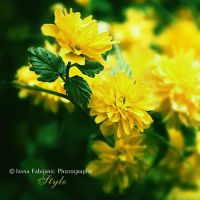 Yellow flowers by ironicna