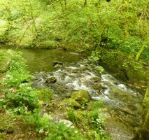 Lydford Gorge: View 152 by yaschaeffer