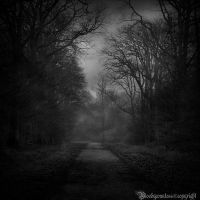 In the dark forest III by CountessBloody