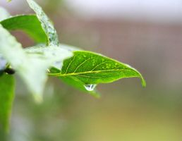 Leaf and Droplet by ZytonX