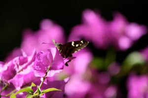 Butterflies are self propelled flowers. by ahley