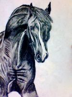 Charcoal Horse by chessapphire1214