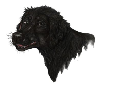 black dogs face by DogDust