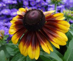 Brown Eyed Susan by AudraMBlackburnsArt