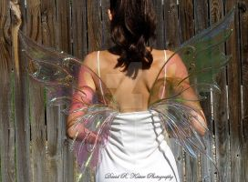 Iridescent clear faery wings by FairyberryBlossoms