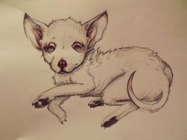 Rocky The Chihuahua by MOKrubi
