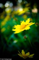 Nature Shots 9 by dargor1406