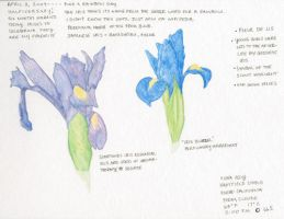 Nature Journal 00004 by fionagh